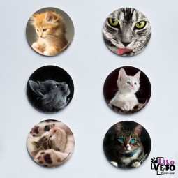 LOT 6 MAGNETS CHATS